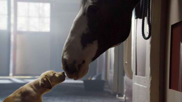 14 Awesome Superbowl Ads for 2014